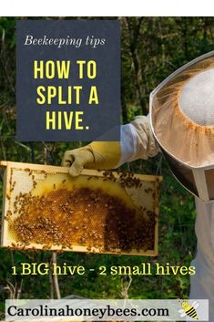 Learning how to split a beehive is a task for the 2nd year beekeeper and beyond. Splitting hives can be successful if done in the right way at the right time of year. It's all about resources #beekeeping #bees #beehive