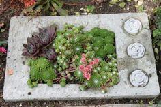 Betongplatta med växter