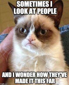 Top 20 Funny Cat Memes
