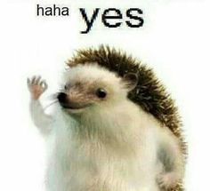 Spiky doggo haha yes Most Beautiful Love Quotes, Best Love Quotes, Baguio, Reaction Pictures, Funny Pictures, Memes Humor, Funny Memes, Bts Memes, Memes Gretchen