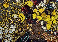 Bild från http://nicolor.se/blog/WG_Edenmont_Intuition_2011-XL.jpg.