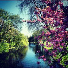 Regent's Park est l'un des parcs royaux de Londres qui contribue à faire de la capitale britannique la ville la plus verte d'Europe. http://www.cityoki.com/fr/londres/decouvrir/regents-park-et-london-zoo