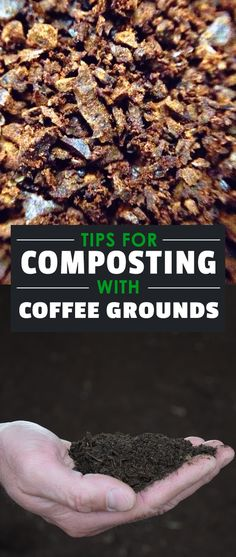 Composting with coffee grounds is one of the best ways to make use of a waste product that most of us just throw straight into the trash to go to landfill.