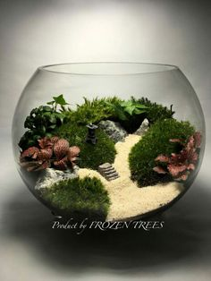 43 Best Terrariums Images Small Gardens Fish Tanks Miniature Gardens