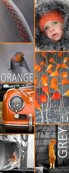 Lus Inspiration ღ orange and grey