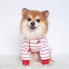 Dog Coats & Jackets Faithful Dog Coat Costume Christmas Winter Warm Dog Cat Cotton Polyester Clothes Sport Style Cute Stripe Apparel Cool Baseball Uniform