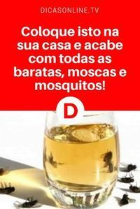 Acabar com insetos | Coloque isto na sua casa e acabe com todas as baratas, moscas e mosquitos!