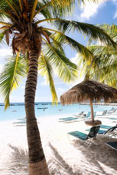 Iguana Beach with Palm Trees and Palapa, Renaissance Island, Aruba I was here this summer! Dream Vacations, Vacation Spots, Greece Vacation, Greece Travel, The Places Youll Go, Places To See, Beach Pink, I Love The Beach, Photos Voyages