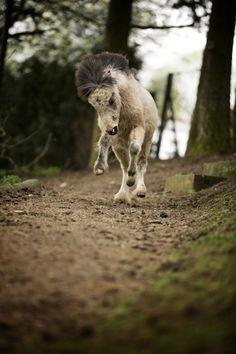 Wildes Pony.