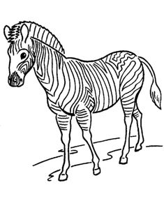 Zoo animal coloring page | Zebra with stripes