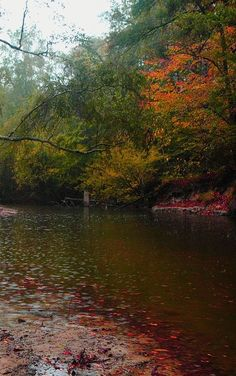 Kisatchie National Forest,Louisiana, USA: