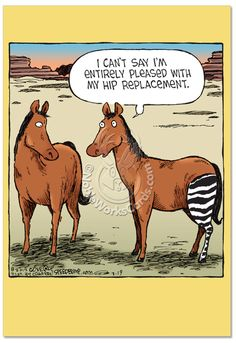 Horse Hip Replacement Cartoons Get Well Greeting Card Dave Coverly