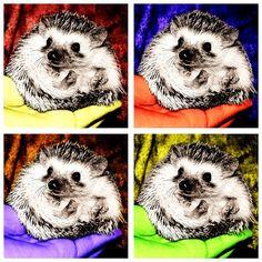 Warhol's Four Hedgehogs (1962)