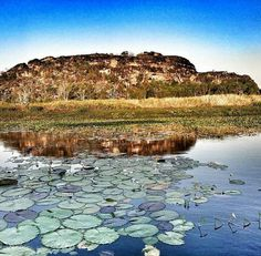 Mount Borradaile, Arnhem Land, NT