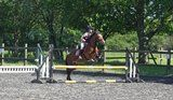 **PONY SHARE/LOAN WANTED** - - Listed by Sell it socially     GLDI9097    has been published on Sell it Socially