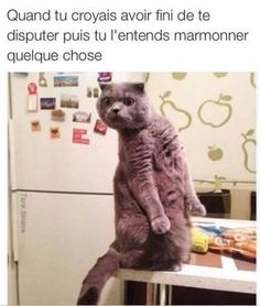 46 Hilarious Photos With Captions That Are Just Way Beyond Funny 16 Cheese Memes That'll Make You Say 'You Gouda Brie Kidding Me!' 27 Funny Memes Hilarious 27 Funny Memes Hilarious Funny Pictures – March 2017 Dance parties and bib-stealing. Funny Animal Jokes, Stupid Funny Memes, Funny Relatable Memes, Haha Funny, Animal Memes, Funny Cute, Funny Animals, Funniest Memes, Animal Humor