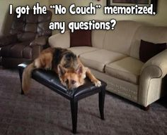 How to train your German Shepherd dog - The Pooch Online Cute Funny Animals, Funny Animal Pictures, Dog Pictures, Funny Dog Memes, Funny Dogs, Cute Dogs, Humor Animal, Animal Memes, Canis Lupus