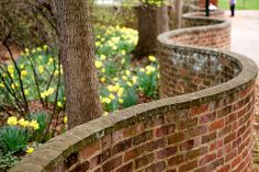 Daffodils and serpentine wall by Vironevaeh, via Flickr