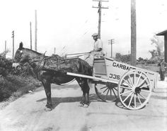 A unknown man in Memphis,Tenn.with a mule pulling what may be a city owned Garbage Cart.