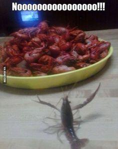 Poor crayfish