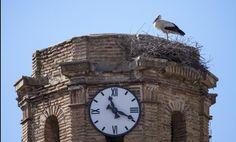 #nidi #cicogne #stork #nests