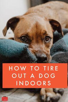 Dog Breeds Little, Best Dog Breeds, Big Dog Toys, Best Dog Training, Training Tips, Dog Organization, Durable Dog Toys, Sleeping Puppies, Dog Collar Tags