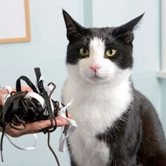 Cat Needed Life-Saving Surgery After Eating Shoelaces