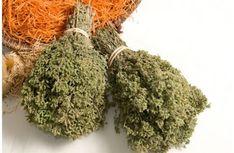 "Origanum vulgaris hirtum - Ρίγανη Αρχικά της δίνεται η βοτανική ονομασία Origanum heracleoticum ""ορίγανος Ηρακλεωτική"