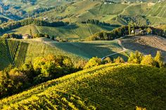 Steiermark - Trendregion in Österreich | Urlaubsguru.de Vineyard, Outdoor, Ski, Viajes, Outdoors, Vine Yard, Vineyard Vines, Outdoor Games, The Great Outdoors