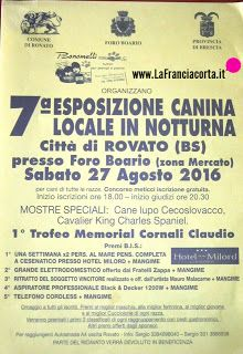 SETTER INGLESE: ROVATO (BS) 7° esposizione canina locale in nottur... King Charles Spaniel, Cavalier King Charles