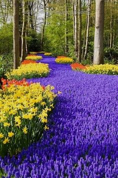 Keukenhof, Holland, World's Largest Flower Garden  Keukenhof, Holland, World's Largest Flower Garden | See More Pictures  http://www.scienceandnature.science/2017/06/01/keukenhof-holland-worlds-largest-flower-garden/