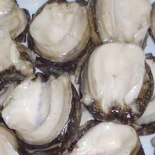 Chilean Loco Meat (Chilean Abalone)