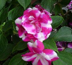 Prairie Rose's Garden: Pretty in Pink
