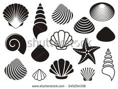 Set of different black sea shells and starfish