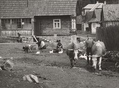 Martin Martinček: Vyháňanie volov na pašu:1962 - 1968