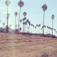 Pumpkins and palm tress might not be the typical autumn setting, but California is a great place to visit during the fall. Photo courtesy of breee88 on Instagram.