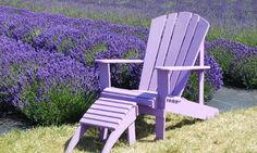 Roll Out Garden Bed of English Lavender Seeds  $14.99(0% off)  Exp: May/8/2015. More deals at: www.dealleak.com.