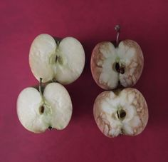 "Rosie Dutton, a teacher in Birmingham, U., has taken the ""it's what's on the inside that counts"" anti-bullying lesson to the next level using two apples. Anti Bullying Lessons, Anti Bullying Week, Effects Of Bullying, Anti Bullying Activities, Apple Activities, Stop Bullying, Primary Activities, Guidance Lessons, Object Lessons"