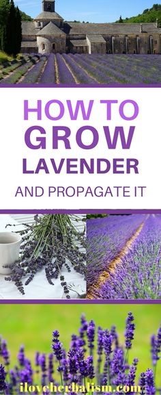 Very informative article on how to grow lavender and propagate it. If you plan to grow lavender then you should read this article and follow instructions.