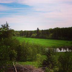 Savoir peindre, je voudrais ça Country Roads, I Want You, Landscapes