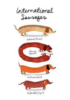 "Discover more details on ""dachshund dogs"". Take a look at our internet site. Standard Dachshund, Dachshund Breed, Dachshund Art, Long Haired Dachshund, Daschund, Dachshund Quotes, Dapple Dachshund, Dachshund Gifts, Kielbasa"