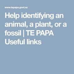 Record the right details so we can help you identify an animal, a plant, or a fossil. Science Topics, Spring Sign, Flora And Fauna, Fossils, Bugs, Plants, Animals, Animales, Animaux