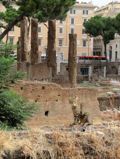 Largo di Torre Argentina (Sacred Area of Largo Argentina) Rome: Where most of the Roman cats make their home! Fav spot!