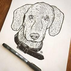 #draw #drawing #illustration #linework #sketchbook #sketch #flashtattoo #tattoo #tatouage #print #ink #paper #puppy #dog #englishpointer #hydeomega #sherlock #blackwork #art #work #animal #friend