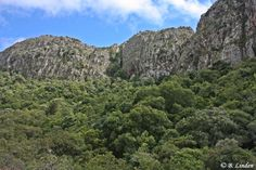 Northern Mistbelt Forests in the western Soutpansberg Forests, Conservation, South Africa, City Photo, Southern, River, Mountains, Landscape, Places