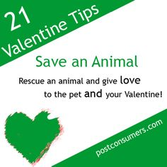It's not just humans who need love! Not only can saving an animal from a shelter be a fantastic way to spread some love in the world, but pets make gifts of love that keep giving love. It's tip number seven in our fun and eco-friendly ways to celebrate Valentine's Day. #valentines #valentinesday #animals