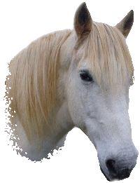 anniversaire cheval poney