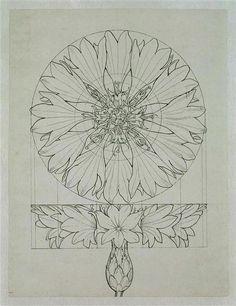 philipp otto runge : cornflower : geometric study