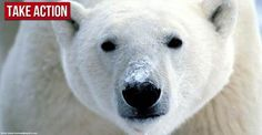 BREAKING: Shell gets greenlight to drill in the Arctic Ocean