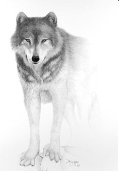 lobo dibujo a lapiz - Buscar con Google
